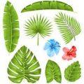 amazon plant teachers
