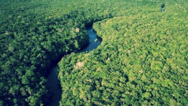 amazon-jungle-wallpaper