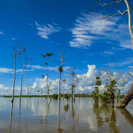 Amazonas State Government Launches Program to Halt Deforestation